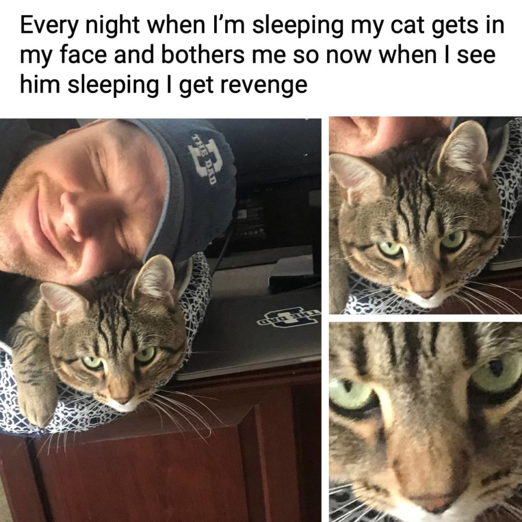 Every night when I'm sleeping my cat gets in my face and bothers me so now when I see him sleeping I get revenge. Pets, animals, naps