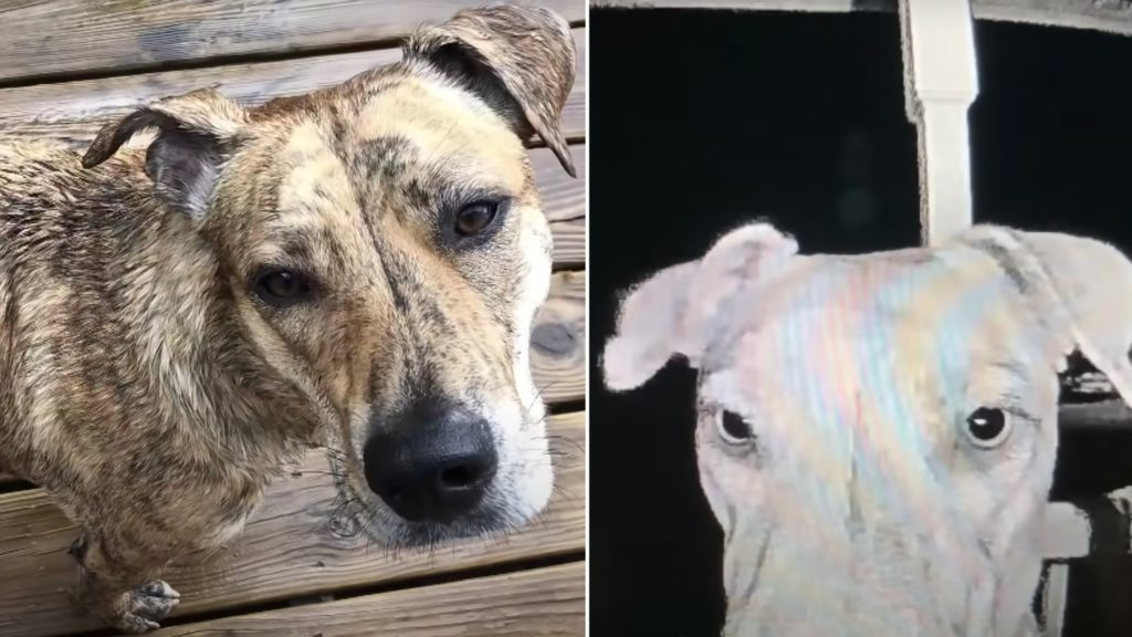 Dog Rings Doorbell Hours After Running Away From Home