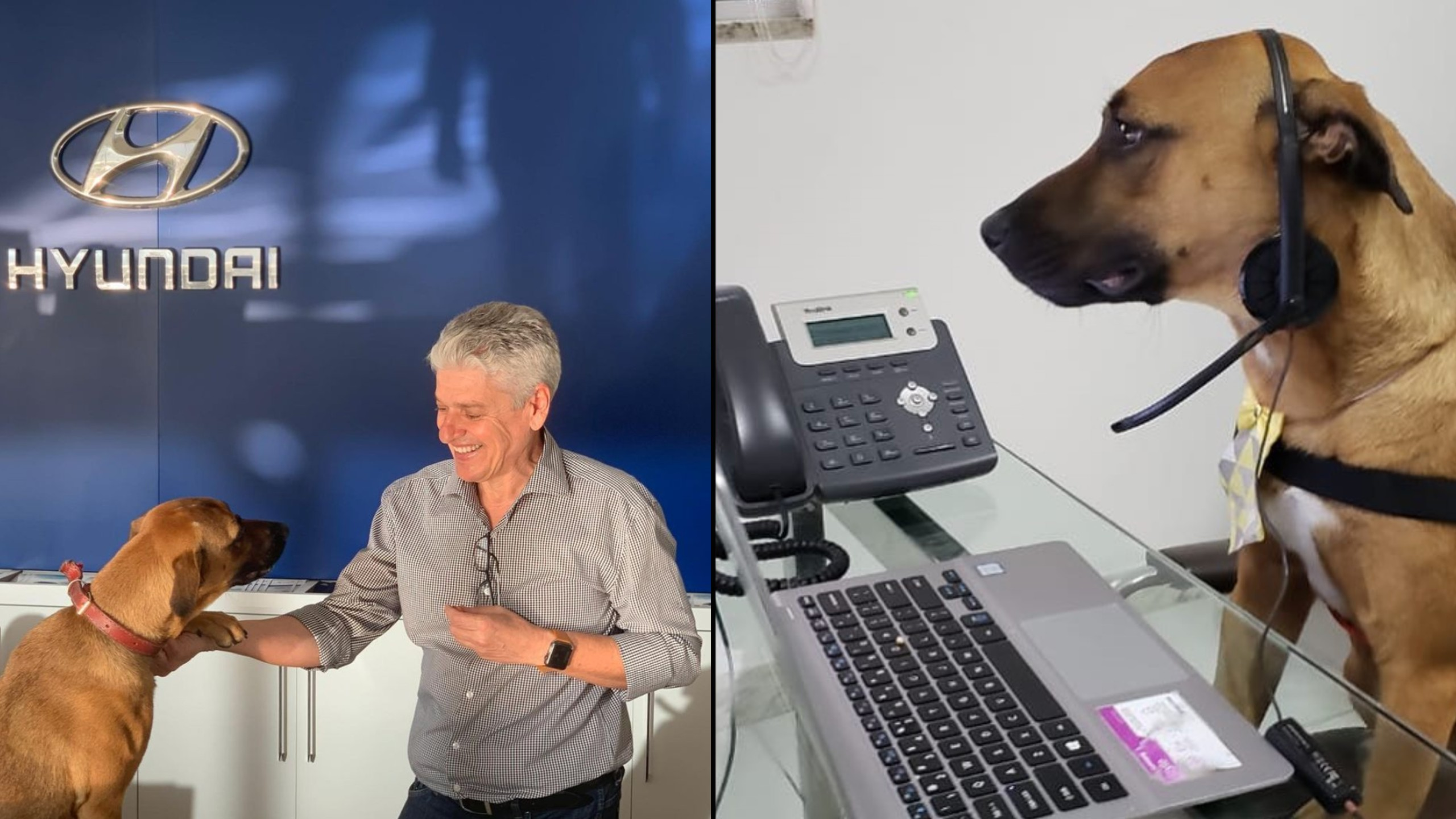 Stray dog hired at Hyundai Dealership