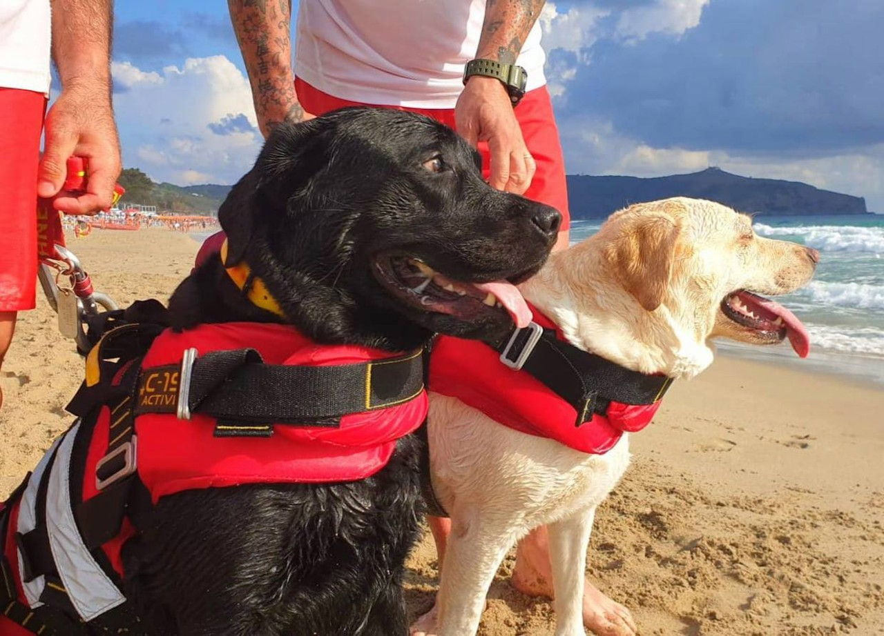 lifeguard dogs, Italy, animals