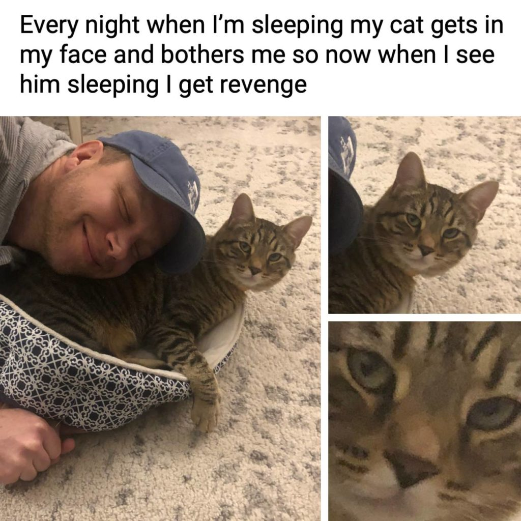 Every night when I'm sleeping my cat gets in my face and bothers me so now when I see him sleeping I get revenge. Pets, animals, getting even