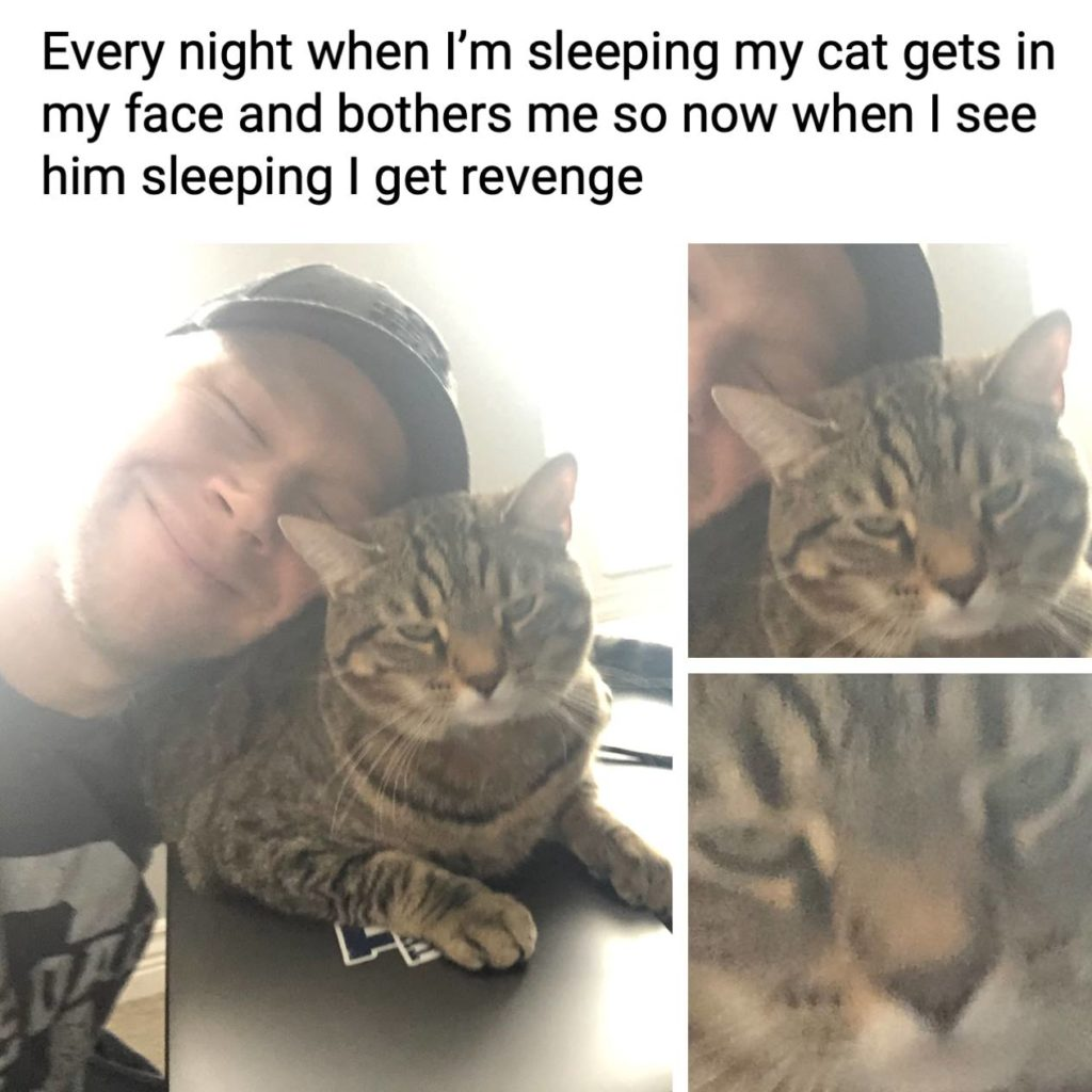 """Every night when I""""m sleeping my cat gets in my face and bothers me so now when I see him sleeping I get revenge. Meme, pet, annoying"""