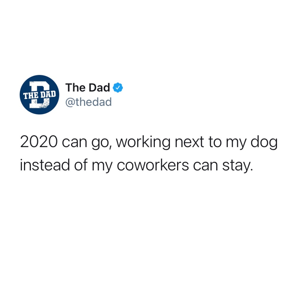 2020 can go, working next to my dog instead of my coworkers can stay. Tweet, animals, jobs