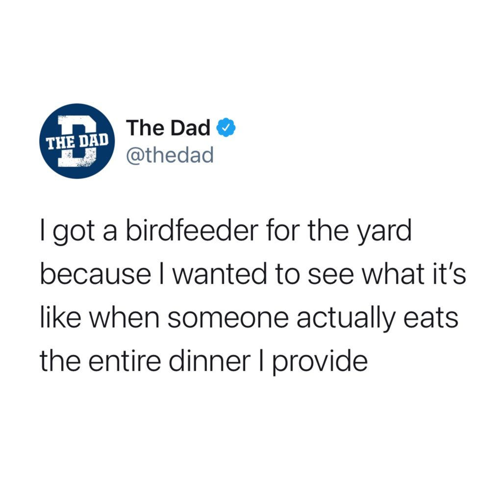 I got a birdfeeder for the yard because I want to see what it's like when someone actually eats the entire dinner I provide. Food, cooking, tweet, nature