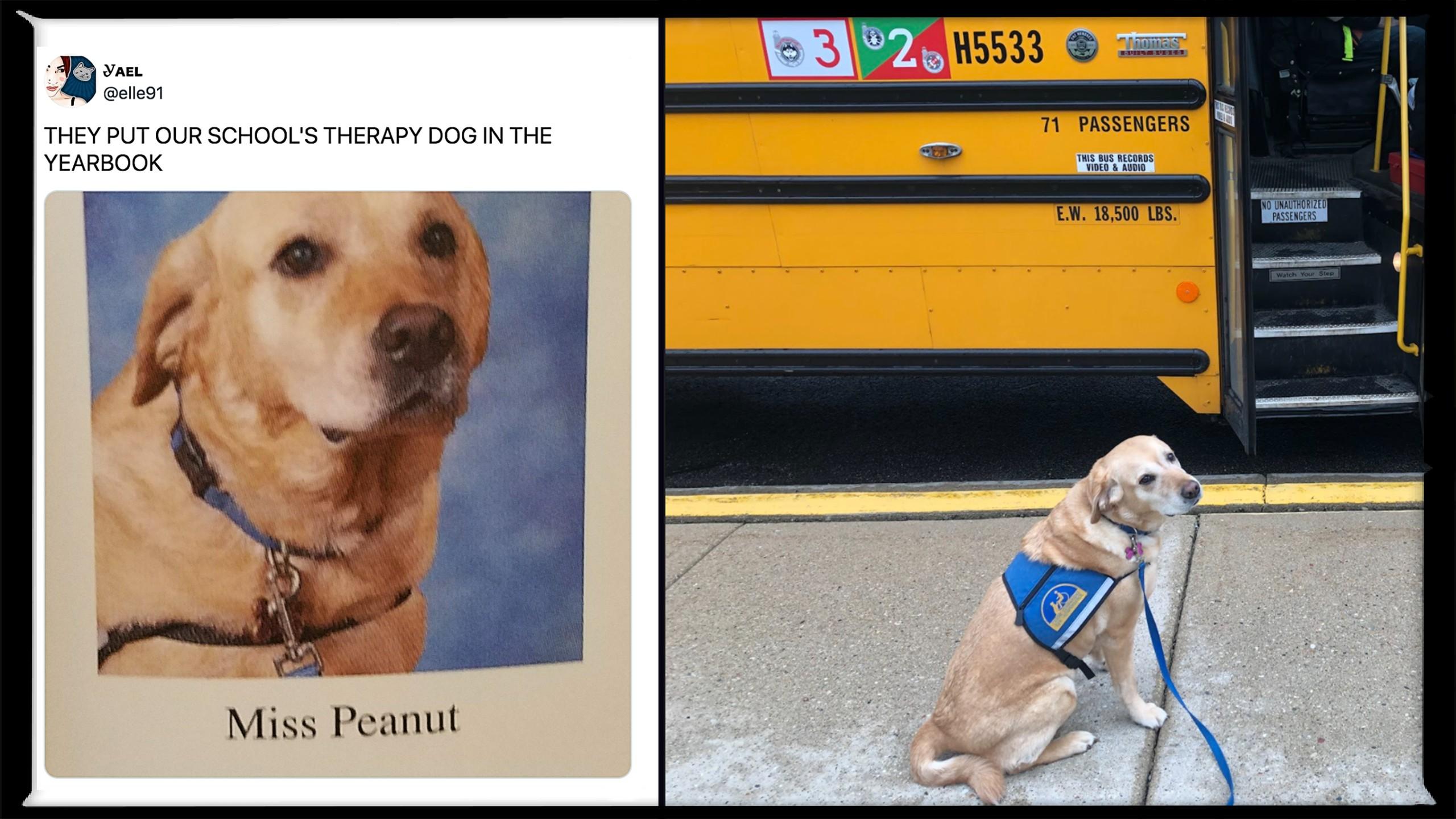Facility dogs like Peanut make school a whole lot more fun
