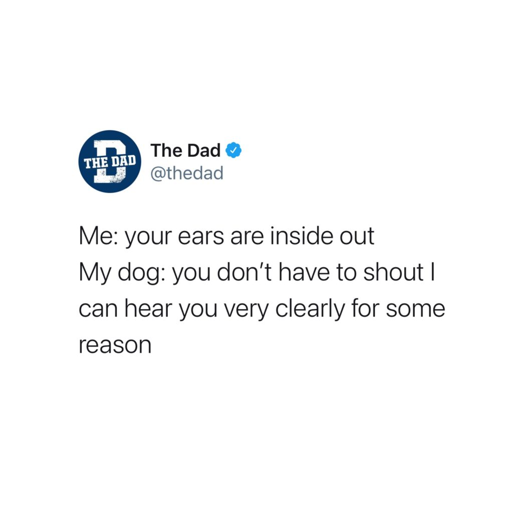Me: Your ears are inside out. My dog: You don't have to shout I can hear you very clearly for some reason. Tweet, pets, animals