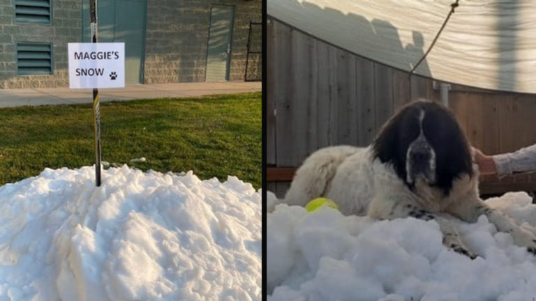 Dog Who Loves Playing In The Snow