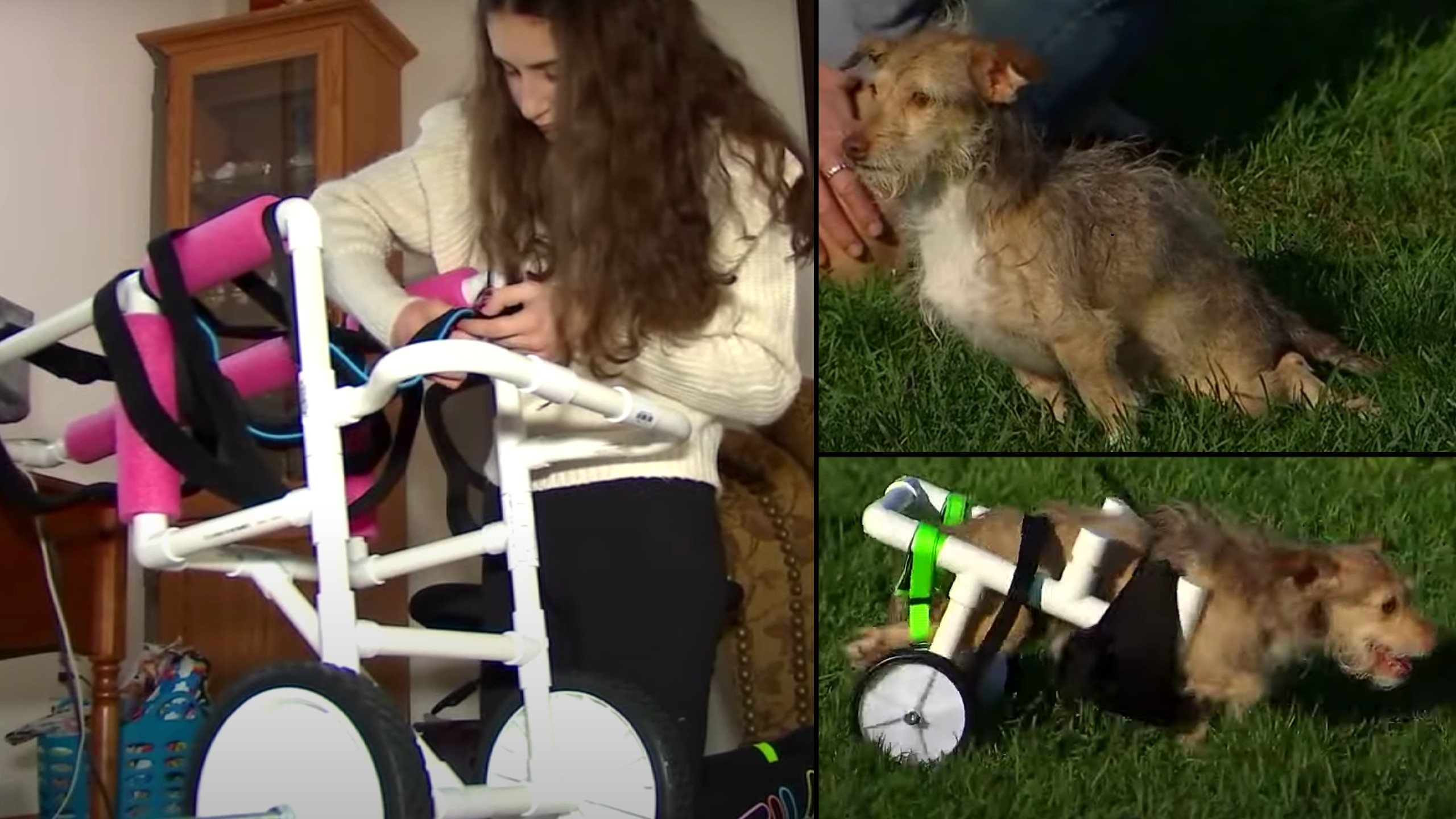 Teen builds wheelchairs for animals in need